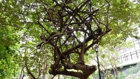 Θεαματική μορφή δέντρων στοκ φωτογραφία