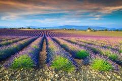 Θεαματικοί lavender τομείς στην περιοχή της Προβηγκίας, Valensole, Γαλλία, Ευρώπη στοκ φωτογραφία με δικαίωμα ελεύθερης χρήσης