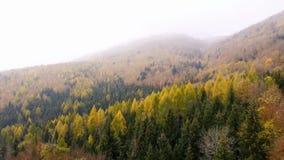 Θεαματικό μήκος σε πόδηα κηφήνων μιας υπερυψωμένης άποψης ενός δάσους φθινοπώρου στα ελβετικά αλπικά βουνά απόθεμα βίντεο