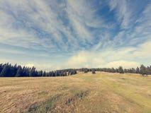 Θεαματικό τοπίο φθινοπώρου με το λιβάδι που περιβάλλεται από το δάσος δέντρων πεύκων στοκ φωτογραφία με δικαίωμα ελεύθερης χρήσης
