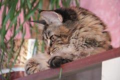 Θεοδώρα, η γάτα Στοκ φωτογραφία με δικαίωμα ελεύθερης χρήσης