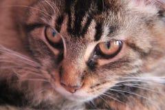 Θεοδώρα, η γάτα Στοκ εικόνα με δικαίωμα ελεύθερης χρήσης