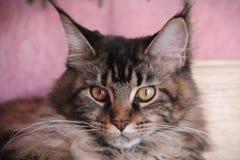 Θεοδώρα, η γάτα Στοκ Φωτογραφίες
