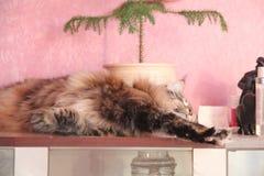 Θεοδώρα, η γάτα Στοκ φωτογραφίες με δικαίωμα ελεύθερης χρήσης