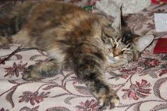Θεοδώρα, η γάτα Στοκ εικόνες με δικαίωμα ελεύθερης χρήσης