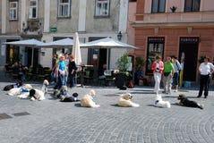 Θεραπευτικά σκυλιά στην επίδειξη Στοκ Εικόνα