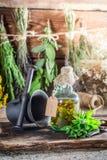 Θεραπευτικά χορτάρια στα μπουκάλια ως φυσική ιατρική Στοκ εικόνα με δικαίωμα ελεύθερης χρήσης