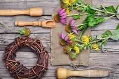 Θεραπευτικά Echinacea και inula Στοκ Εικόνα