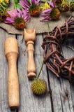 Θεραπευτικά Echinacea και inula Στοκ φωτογραφίες με δικαίωμα ελεύθερης χρήσης