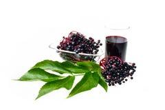 Θεραπευτικά elderberry φρούτα Στοκ Εικόνες