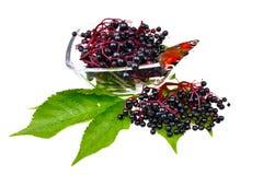 Θεραπευτικά elderberry φρούτα Στοκ εικόνα με δικαίωμα ελεύθερης χρήσης