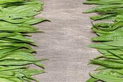 Θεραπευτικό υπόβαθρο με φρέσκο plantain Στοκ εικόνα με δικαίωμα ελεύθερης χρήσης