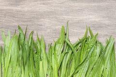 Θεραπευτικό υπόβαθρο με φρέσκο plantain Στοκ φωτογραφίες με δικαίωμα ελεύθερης χρήσης