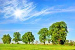 Θερινά δέντρα στοκ φωτογραφίες