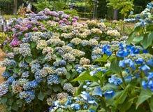 Θερινά ανθίζοντας λουλούδια στο Άρνεμ Κάτω Χώρες Ιούλιος στοκ εικόνα