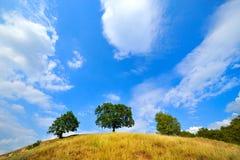 θερινά δέντρα λόφων Στοκ φωτογραφία με δικαίωμα ελεύθερης χρήσης