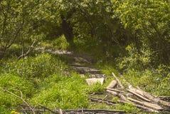 Θερινά ευρωπαϊκά δάση τοπίων Στοκ εικόνες με δικαίωμα ελεύθερης χρήσης