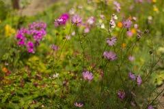 Θερινά ζωηρόχρωμα λουλούδια μια ηλιόλουστη ημέρα Στοκ εικόνες με δικαίωμα ελεύθερης χρήσης