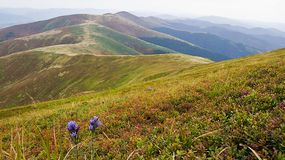Θερινά Καρπάθια βουνά στην Ουκρανία στοκ εικόνες με δικαίωμα ελεύθερης χρήσης
