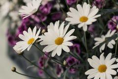 Θερινά λουλούδια άσπρος και πορφυρός πράσινο διάνυσμα θερινού θέματος ουρανού απεικόνισης πεταλούδων στοκ φωτογραφία με δικαίωμα ελεύθερης χρήσης
