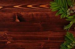 Θερινά νέα πράσινα φύλλα στο εκλεκτής ποιότητας καφετί ξύλινο υπόβαθρο πινάκων Διακοσμητικό πλαίσιο με τη διαστημική, τοπ άποψη α στοκ φωτογραφίες