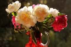 Θερινά λουλούδια σε ένα παράθυρο στο φως του ήλιου Στοκ Φωτογραφίες