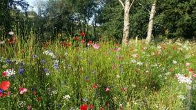 Θερινά λουλούδια στην Ιρλανδία Στοκ εικόνα με δικαίωμα ελεύθερης χρήσης