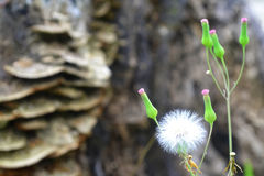 Θερινά λουλούδια στη χλόη Στοκ εικόνα με δικαίωμα ελεύθερης χρήσης
