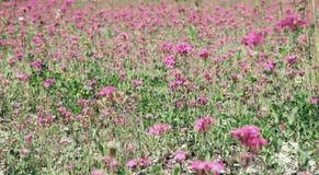 Θερινά λουλούδια στο λιβάδι Στοκ φωτογραφία με δικαίωμα ελεύθερης χρήσης