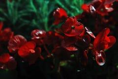 Θερινά λουλούδια στο κόκκινο Στοκ Φωτογραφίες