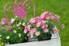 Θερινά λουλούδια Στοκ εικόνα με δικαίωμα ελεύθερης χρήσης