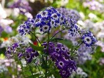 Θερινά λουλούδια Στοκ φωτογραφία με δικαίωμα ελεύθερης χρήσης