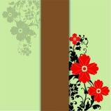 θερινά λουλούδια Στοκ εικόνες με δικαίωμα ελεύθερης χρήσης