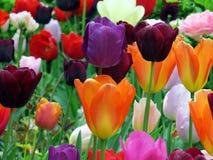 Θερινά χρώματα Στοκ Εικόνες