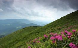 Θερινά Carpathians τοπίο ανατολής Στοκ εικόνα με δικαίωμα ελεύθερης χρήσης
