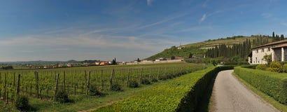 Θερινά wineyards περιοχών του Βένετο Στοκ εικόνες με δικαίωμα ελεύθερης χρήσης