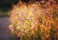 θερινές άγρια περιοχές λ&omicr Στοκ εικόνα με δικαίωμα ελεύθερης χρήσης