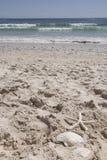 Θερινές διακοπές άμμου θάλασσας κοχυλιών παραλιών κοχυλιών οστράκων αστεριών, καλοκαιρινές διακοπές στην παραλία Στοκ εικόνα με δικαίωμα ελεύθερης χρήσης