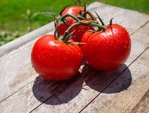 Θερινές ντομάτες Στοκ Φωτογραφία
