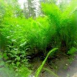 Θερινές πράσινες φτέρες Στοκ εικόνα με δικαίωμα ελεύθερης χρήσης