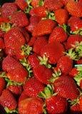 Θερινές φράουλες Στοκ Εικόνα