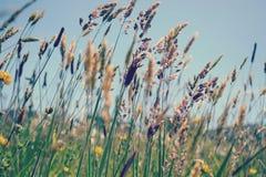 Θερινές χλόες που φυσούν στο αεράκι στοκ εικόνες με δικαίωμα ελεύθερης χρήσης