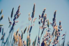 Θερινές χλόες που φυσούν στο αεράκι στοκ φωτογραφία με δικαίωμα ελεύθερης χρήσης