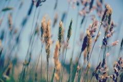 Θερινές χλόες που φυσούν στο αεράκι στοκ εικόνα