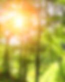 Θερινή ανασκόπηση Στοκ φωτογραφία με δικαίωμα ελεύθερης χρήσης