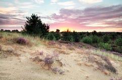 Θερινή ανατολή πέρα από τον αμμόλοφο με την ερείκη Στοκ εικόνα με δικαίωμα ελεύθερης χρήσης