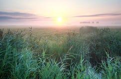 Θερινή ανατολή της Misty πέρα από το λιβάδι Στοκ Εικόνα