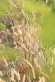 Θερινή ανθίζοντας χλόη και πράσινα φυτά cornfield στο αγροτικό AR Στοκ Εικόνες