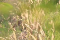 Θερινή ανθίζοντας χλόη και πράσινα φυτά cornfield στο αγροτικό AR Στοκ Εικόνα