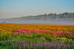 Θερινή αυγή Στοκ εικόνες με δικαίωμα ελεύθερης χρήσης